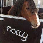 Molly the horse
