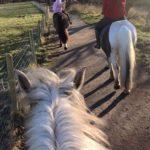 riverside horse track