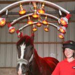 horse in solarium